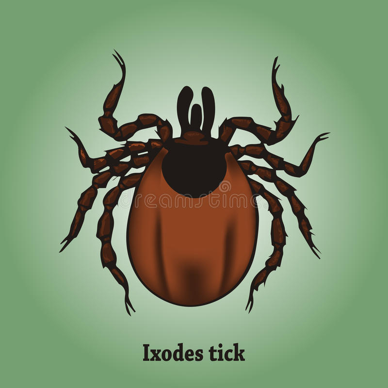 Ixodes tick royalty free stock image