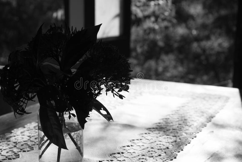 ixorablomma i vas på den wood tabellen nära fönstret som är svartvitt arkivbild