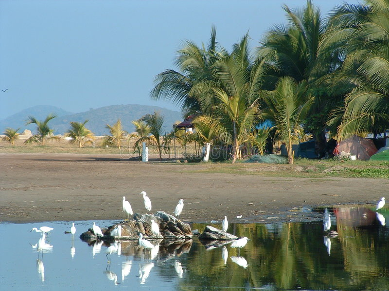 Download Ixtapa beach stock photo. Image of beach, water, sand - 7903482