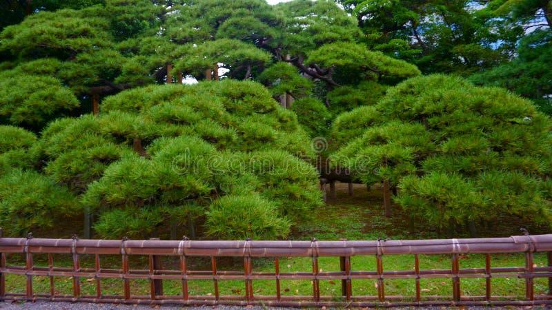 jährige Kiefer 300 Japanischer Garten lizenzfreie stockfotos