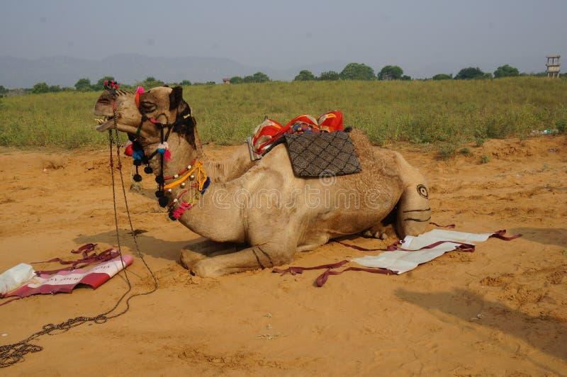 JÄHRLICH 2019 CAMEL FAIR INDIA lizenzfreies stockfoto