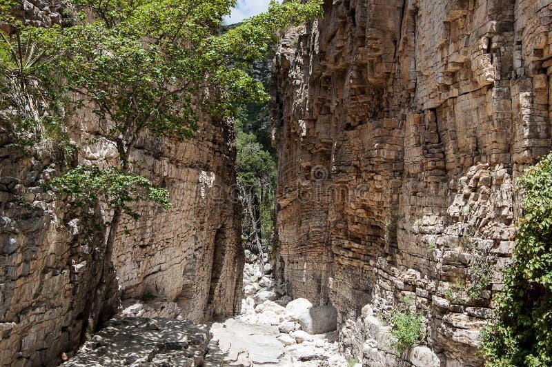 Jäkelns hall i Guadalupe Mountains National Park arkivfoto