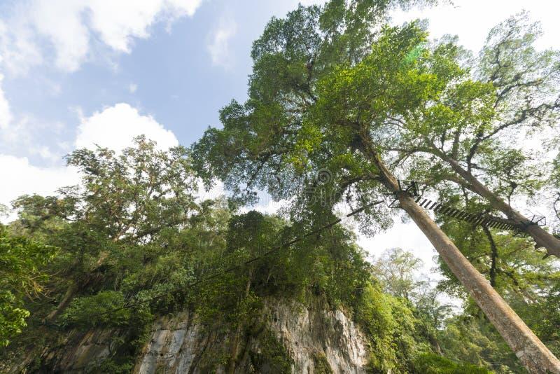 Jäkels grotta, markis och skog i Merida State royaltyfri bild