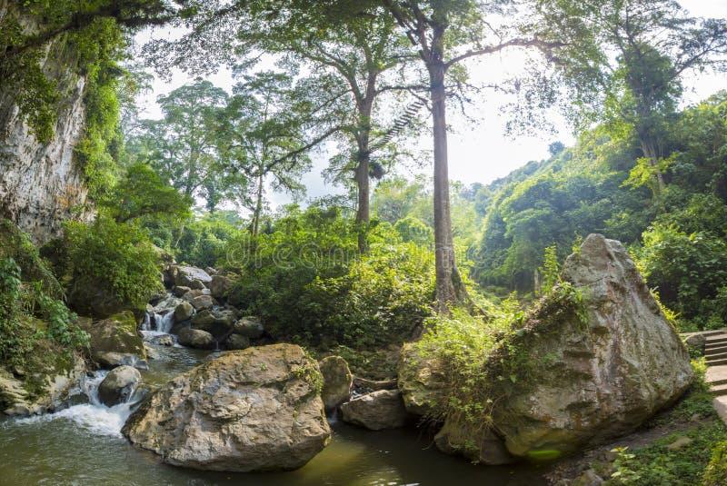 Jäklar grotta, markis och skog i Merida State royaltyfria foton