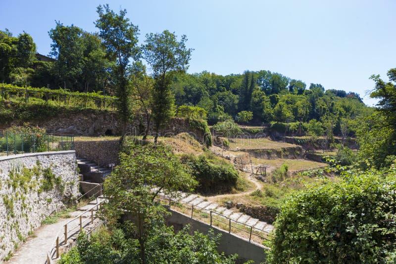 Jämna lantgårdar för vinranka från den Pianillo staden från den Naples regionen royaltyfri foto