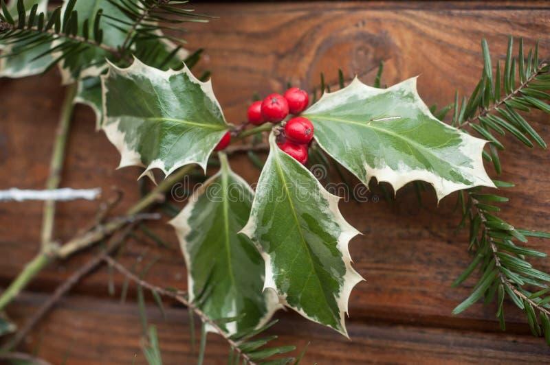 Järnekfilial med röda bär för juldecoratio royaltyfri fotografi