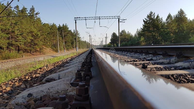 Järnväg i skogen arkivbilder
