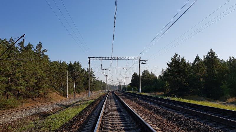 Järnväg i skogen royaltyfri bild