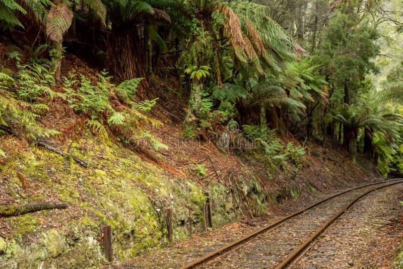 Järnvägslinje som går genom regnskog i Srahan Tasmania Australien arkivbilder
