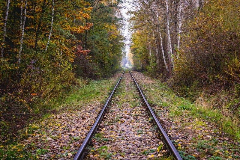 Järnvägsspår i skog fotografering för bildbyråer