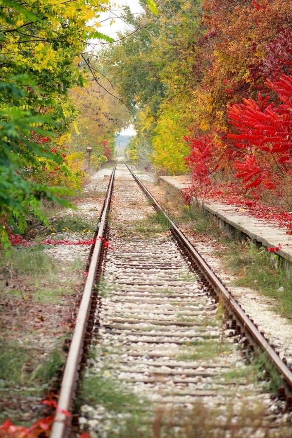 Järnvägsspår med färgrika sidor för härlig naturlig miljö och för fenomenal höst på träd i bakgrund Hösten landskap royaltyfria foton
