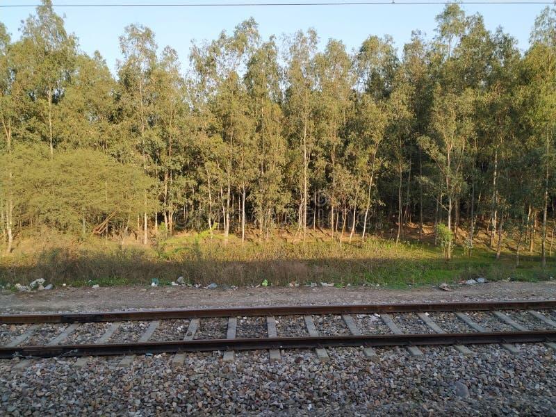 Järnvägsspår och långa träd i thbakgrund royaltyfria bilder
