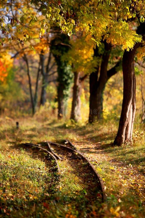 Järnvägsspår och vandringsled i den guld- skogen i höst arkivbilder