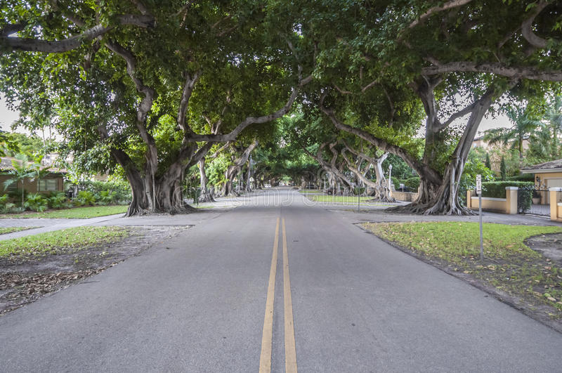 Jätte- Banyanträd i Coral Gables royaltyfri fotografi