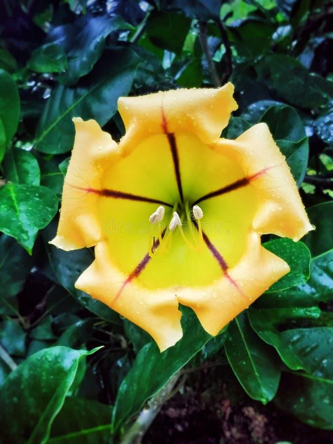 Jätte- blomma royaltyfri bild