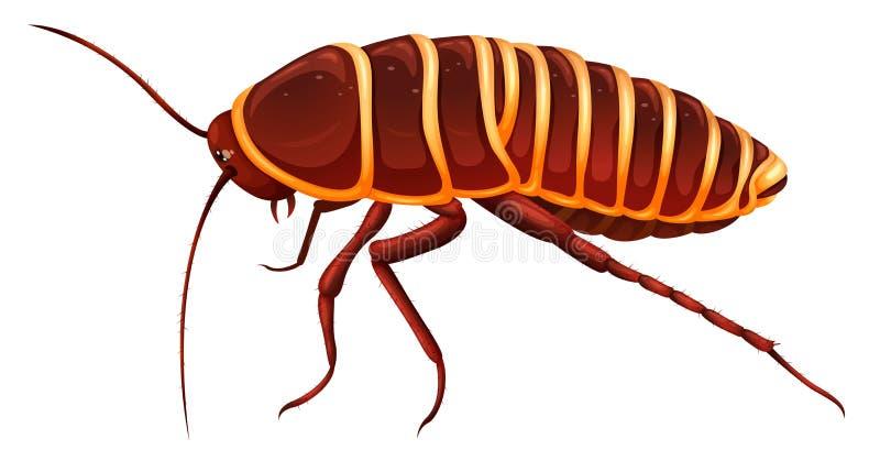 Jätte- kackerlacka - Anamesia royaltyfri illustrationer