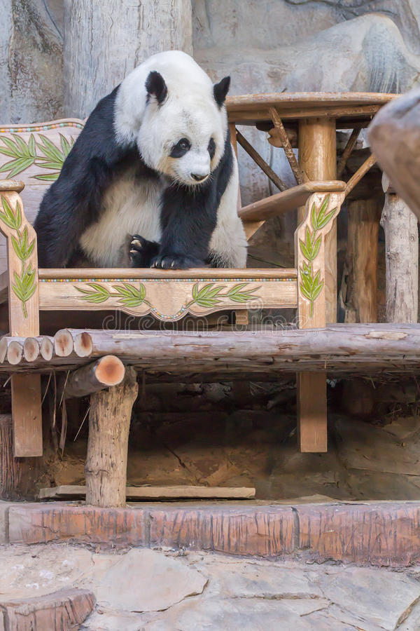 Jätte- pandabjörn royaltyfri fotografi