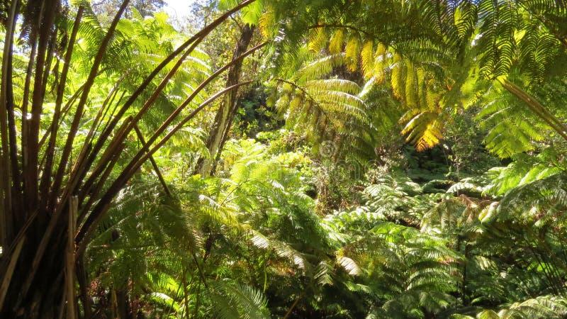 Jätte- skog arkivfoto