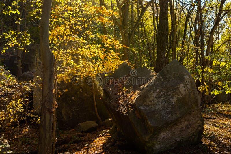 Jätte- stenblock längs de skogsbevuxna slingorna royaltyfri foto