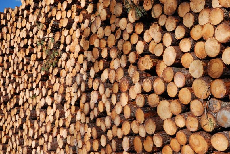 jättelikt buntträ för deforestation royaltyfri foto