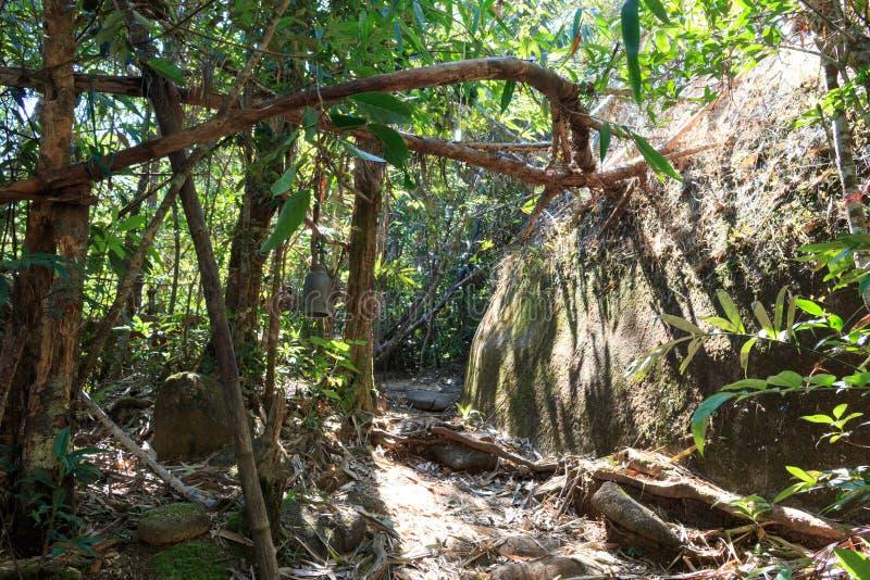 Jätten vaggar i skogen fotografering för bildbyråer