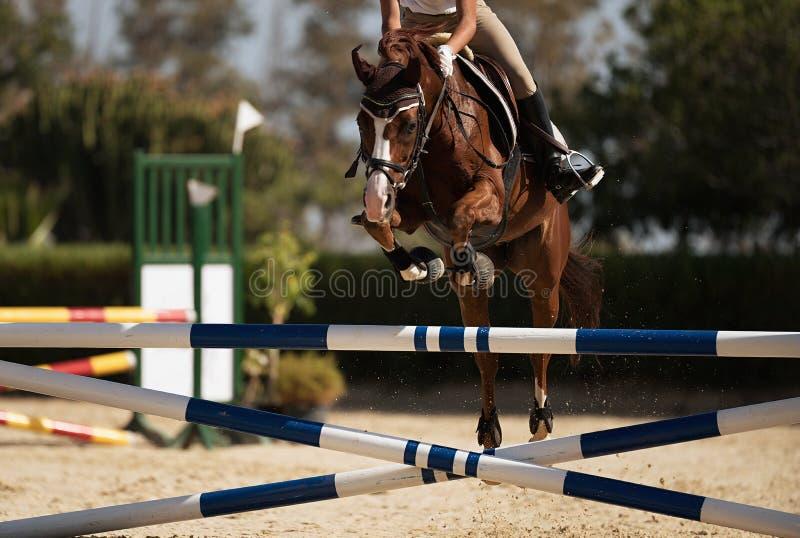 Jóquei em seu cavalo que pula sobre um obstáculo imagem de stock royalty free