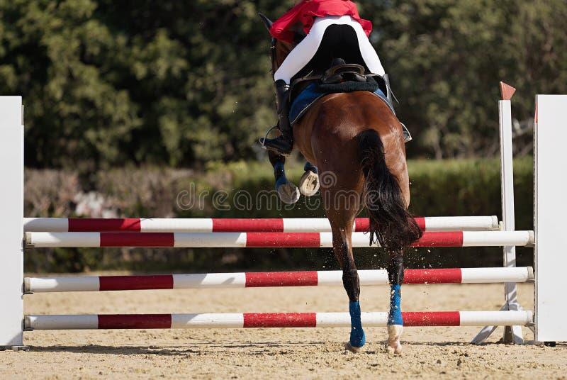 Jóquei em seu cavalo que pula sobre um obstáculo fotografia de stock
