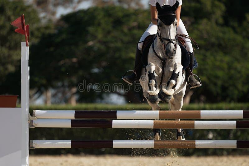 Jóquei em seu cavalo que pula sobre um obstáculo imagens de stock royalty free