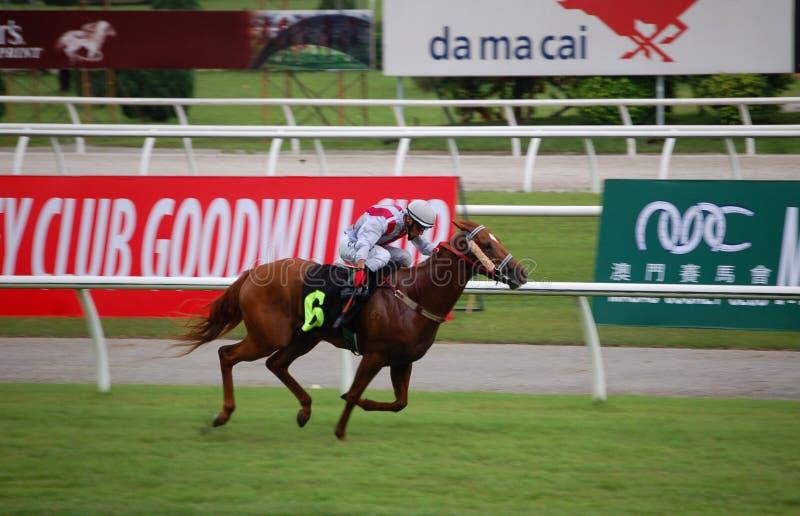 Jóquei O. Chavez da competência de cavalo imagens de stock royalty free