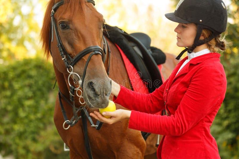 Jóquei para alimentar o cavalo com maçã fotos de stock