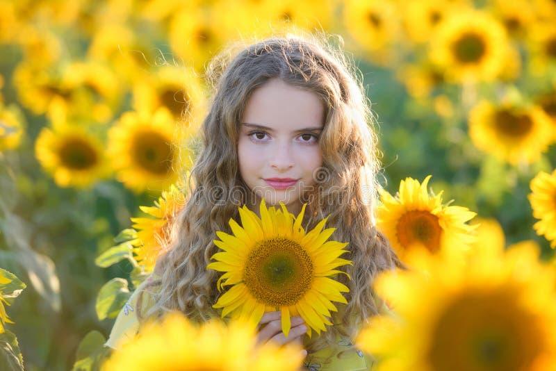 Jóvenes hermosos en el campo de girasoles imagen de archivo libre de regalías