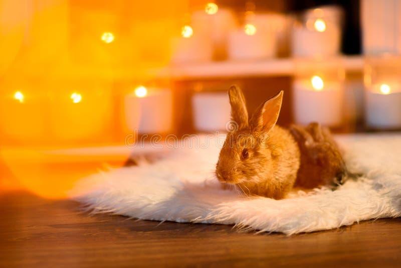 Júntese de los conejos uno antes de otro amarillo coloreado por un resplandor ligero foto de archivo