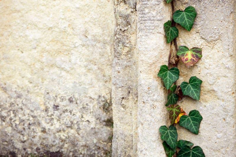 Jüdischer Grundstein blüht Steinsymbol embem Hintergrundkirchhof alte granit Marmor-Gussbuchstaben stockfotografie
