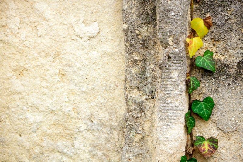 Jüdischer Grundstein blüht Steinsymbol embem Hintergrundkirchhof alte granit Marmor-Gussbuchstaben lizenzfreies stockbild