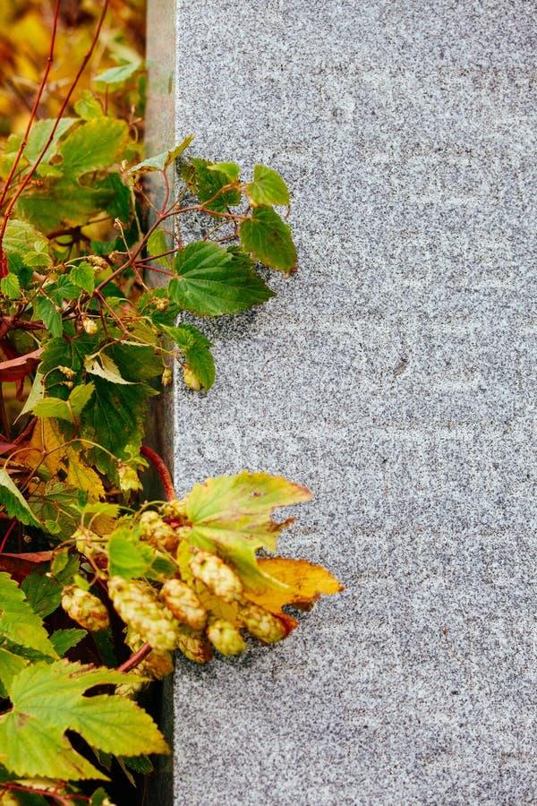 Jüdischer Grundstein blüht Steinsymbol embem Hintergrundkirchhof alte granit Marmor-Gussbuchstaben lizenzfreies stockfoto