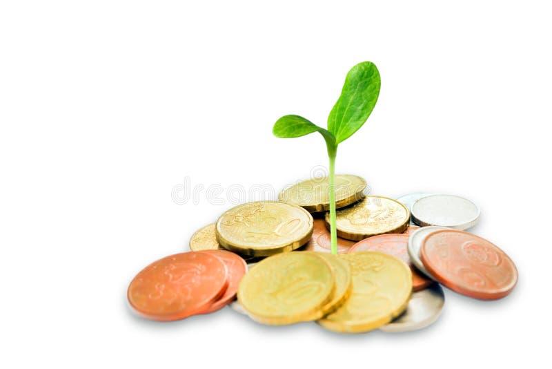 Jüdisches Nächstenliebekonzept Tzedakah, übersetzt wie Nächstenliebe Ein Foto des Geldes, Haufen von Euromünzen und grüner Spröss lizenzfreie stockfotografie