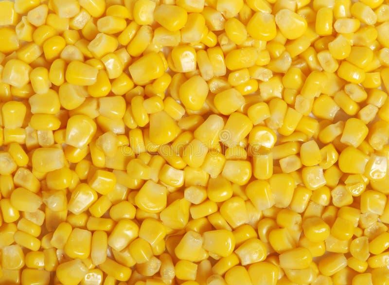 jądra kukurydziane słodkich zdjęcia stock