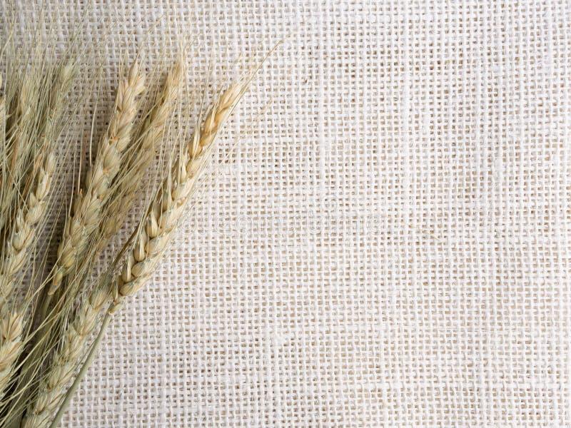 Jęczmień na konopie worka teksturze obrazy stock