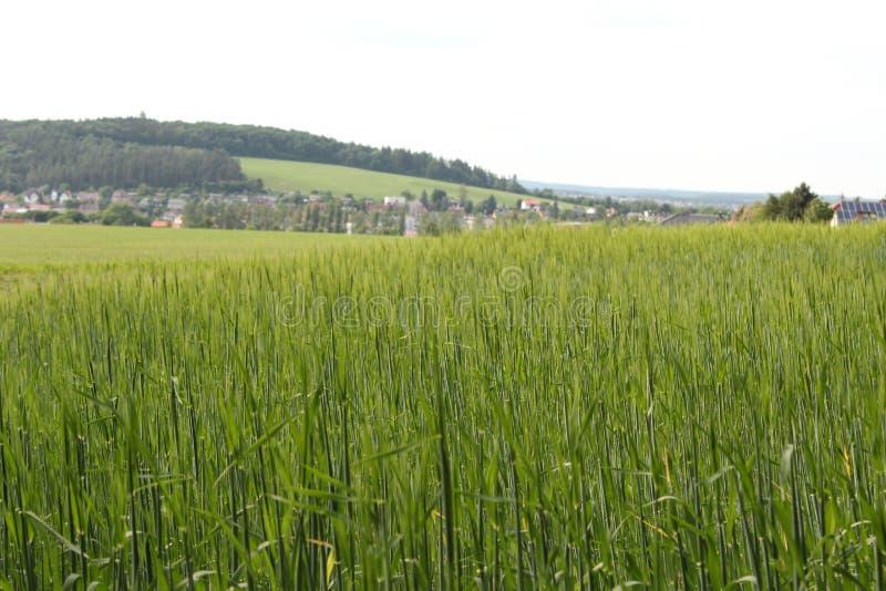 Jęczmienia pole przed wioską zdjęcia stock