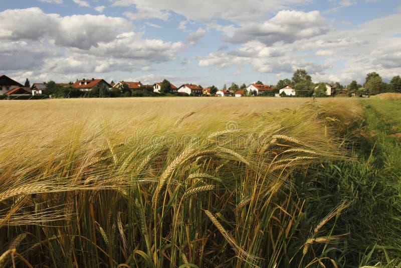Jęczmienia pole przy obrzeżami wioska obrazy stock