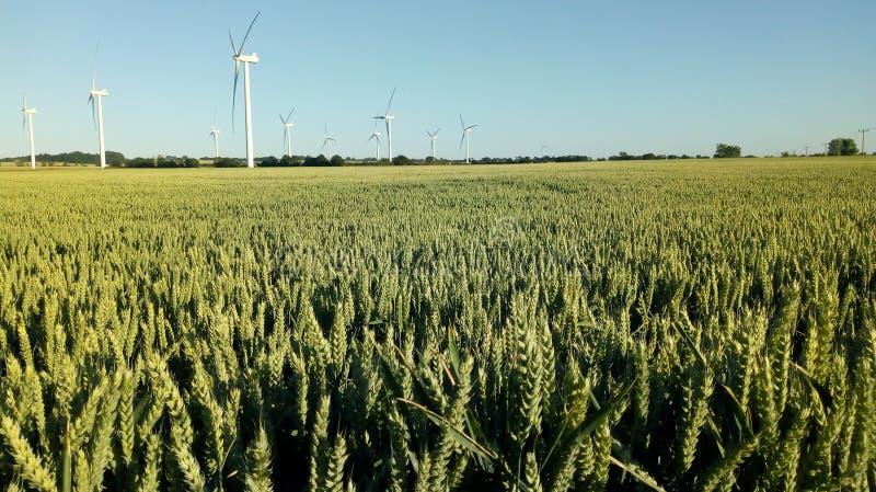 Jęczmienia pole, wiatrowy gospodarstwo rolne fotografia royalty free