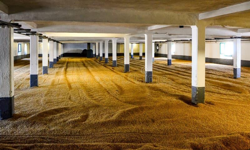 Jęczmienia słód na słodowniczej podłoga w destylarni, Szkocja zdjęcia royalty free