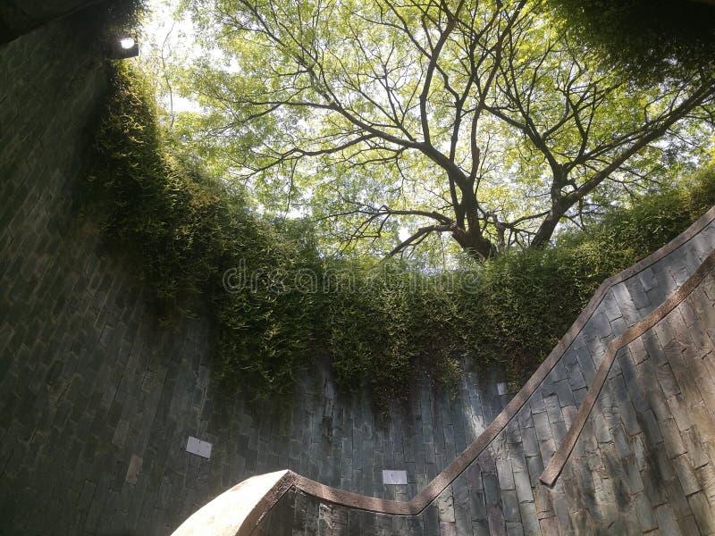 J'ai juste le droit de voir cette beauté à Singapour J'aimerais avoir assez de temps pour explorer Fort Canning photographie stock