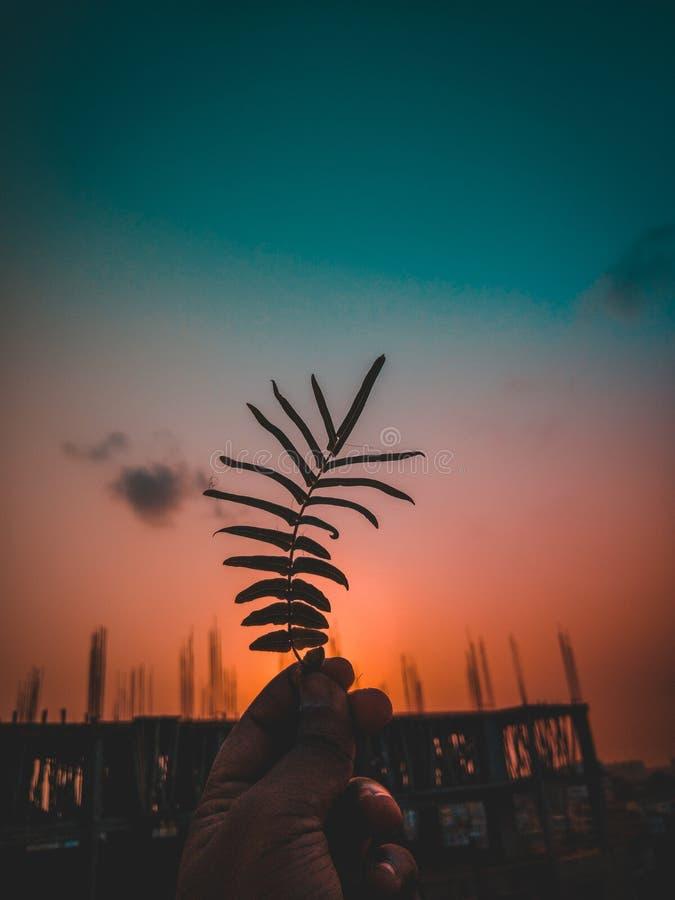 J'aime ce que je vois ce que je me sens et ce que vous êtes à moi photographie stock