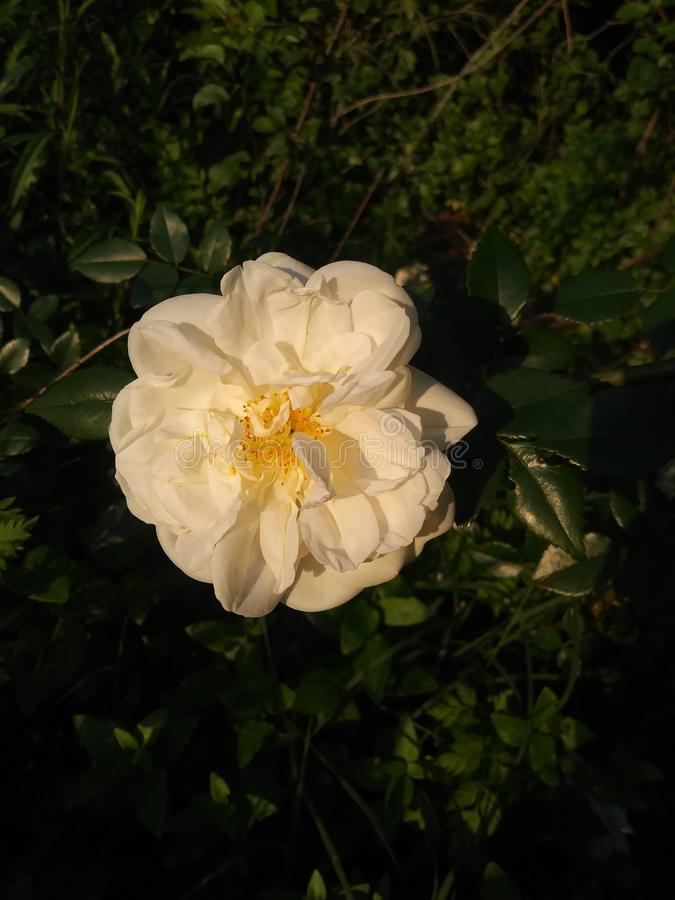 J'aime cette fleur photos stock
