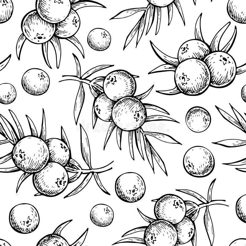 Jałowcowy wektorowy bezszwowy deseniowy rysunek Odosobniony rocznika tło z jagodą dalej, gałąź ilustracji