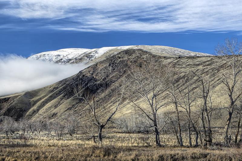 Jałowi drzewa i góry w Waszyngton fotografia royalty free