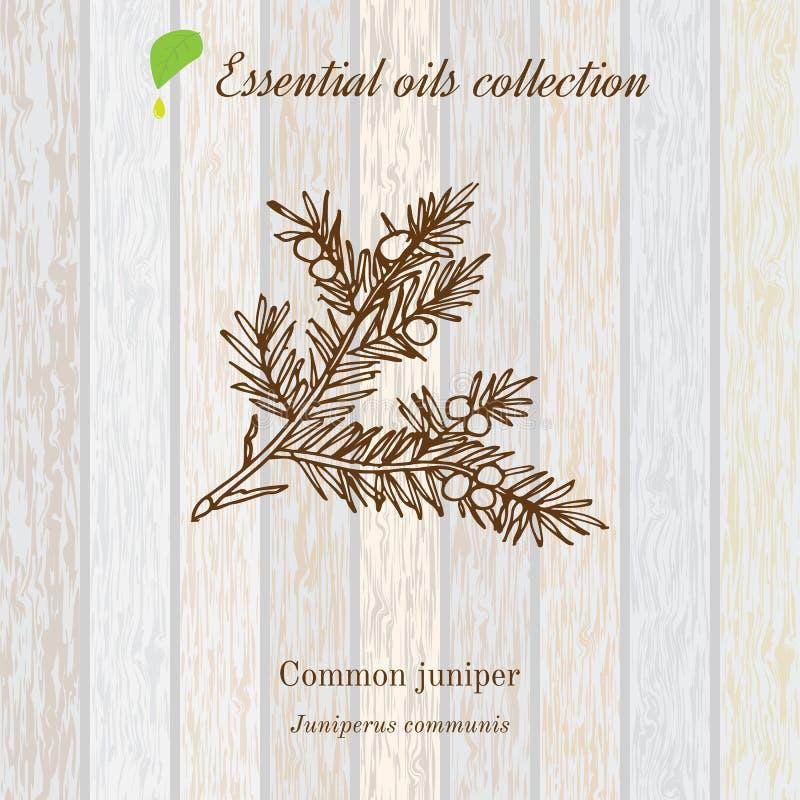 Jałowiec, istotnego oleju etykietka, aromatyczna roślina royalty ilustracja