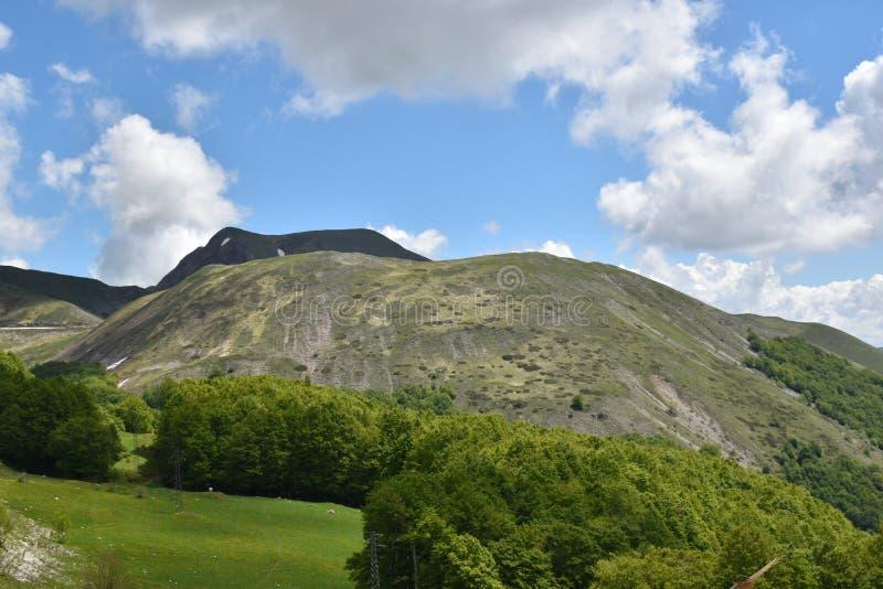 Jałowy widok górski i drzewa obrazy royalty free