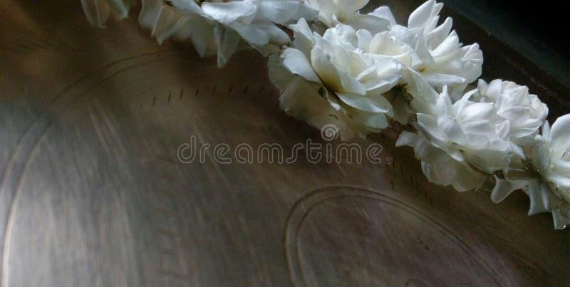 Jaśmin i róże fotografia stock
